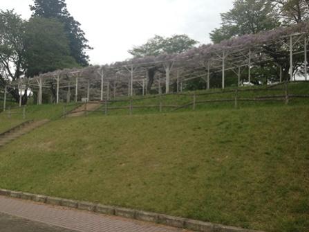Sakurabuchi-1