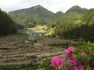 Yotsuya-no-Senmaida
